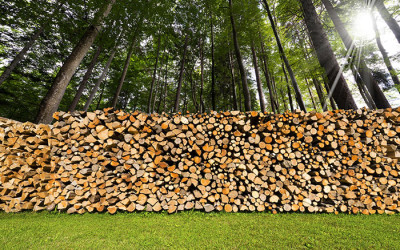Timber Buyers in North and South Carolina